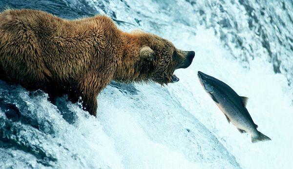 Fish guide: benefits, best options, mercury, preparation ... ⋆ Revolutionary Fitness